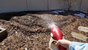 Spraying nematodes through hose sprayer